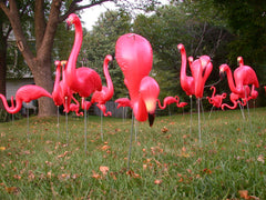 Flamingos DIY (Do It Yourself)