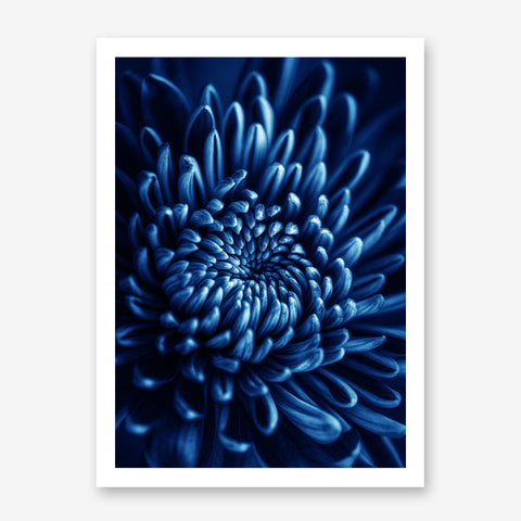 Floral poster print, with a blue flower close-up.