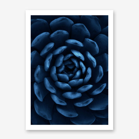 Botanical photography poster print, with a blue succulent plant close-up.