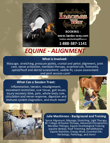 EQUINE Alignment