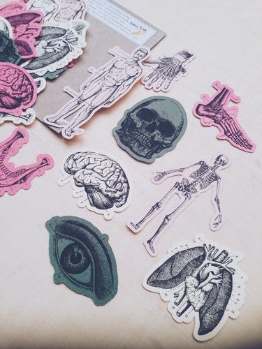 Anatomy Ephemera