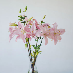 Lilies - Asiatic - Pink  - Bunch