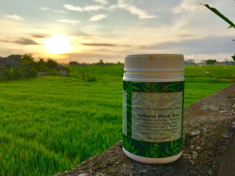 Mayella Travel Blog Recharge Mind Body Soul Bali Style Wheatgrass Capsules