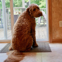Picture of dog waiting to go potty outside