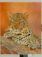 Staring Leopard Oil Painting
