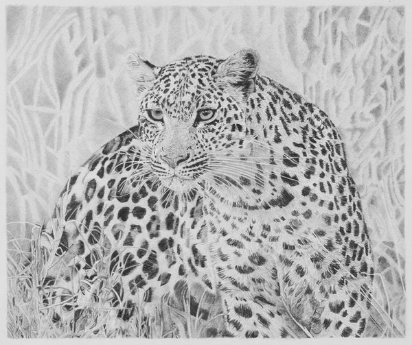 Leopard Pencil Drawing