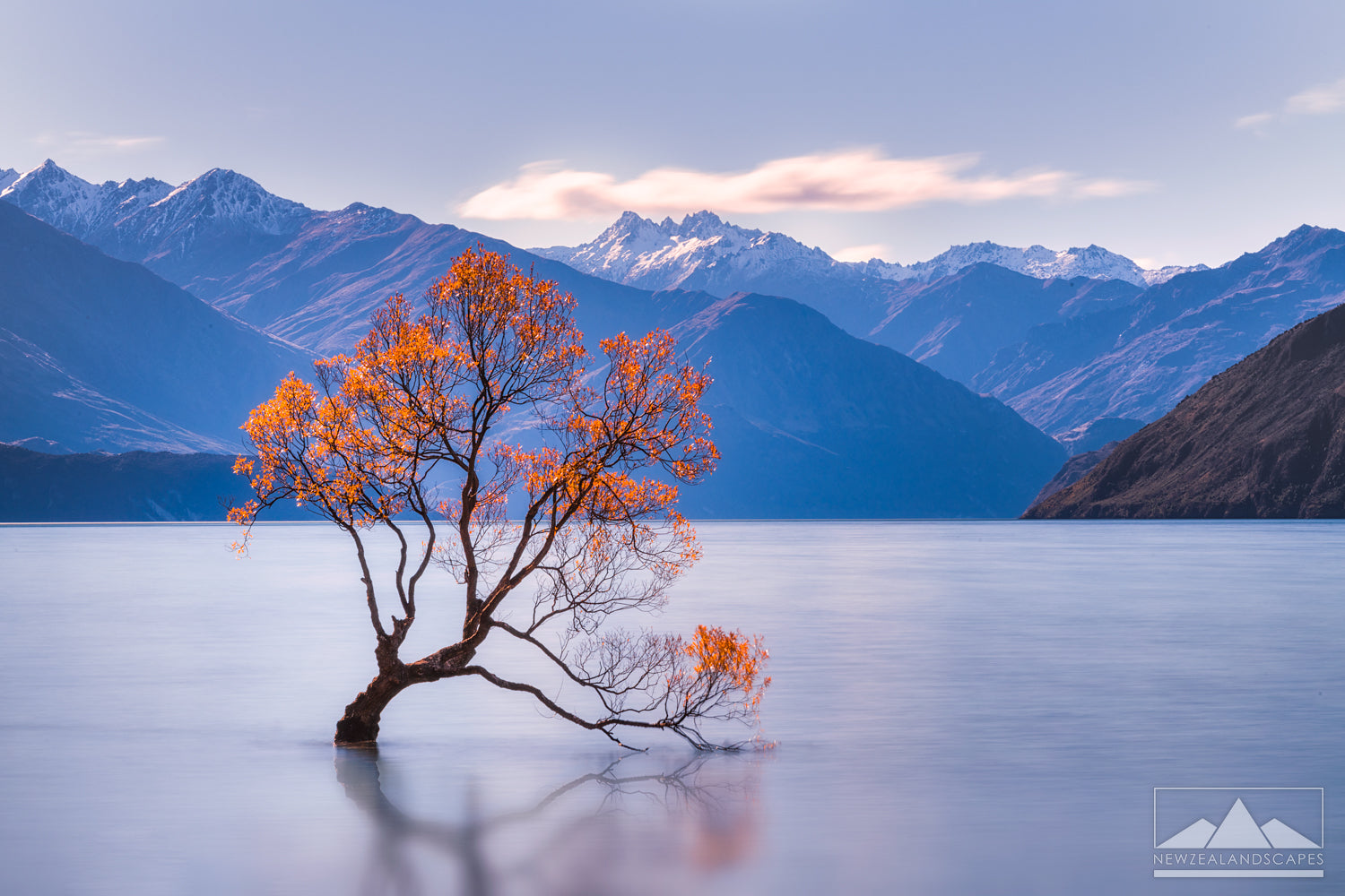 That Wanaka Tree, New Zealand, famous tree in lake photograph