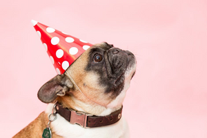 How to Throw An Awesome Doggie Birthday Party