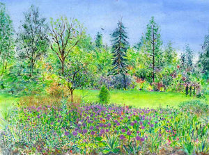 Alliums in the Main Border at RHS Garden Harlow Carr, May, original painting