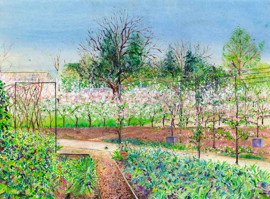 Apple Blossom Hedge in the Kitchen Garden at RHS Garden Harlow Carr, April, original painting