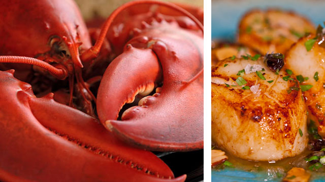 Buy 4 Live Maine Lobsters (1.1 - 1.2lb), Get 1lb Fresh Scallops Free