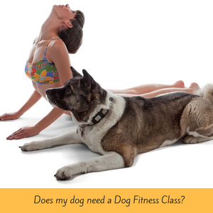 Does my dog need a Dog Fitness Class?