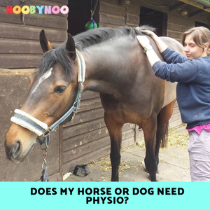 Can Physio help my Dog or Horse?