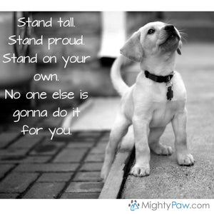 Wise Words… Stand up!
