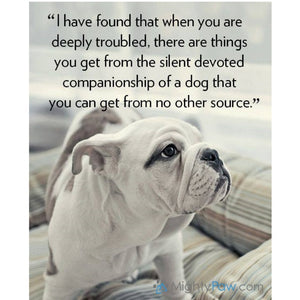 The Silent Devotion of a Dog