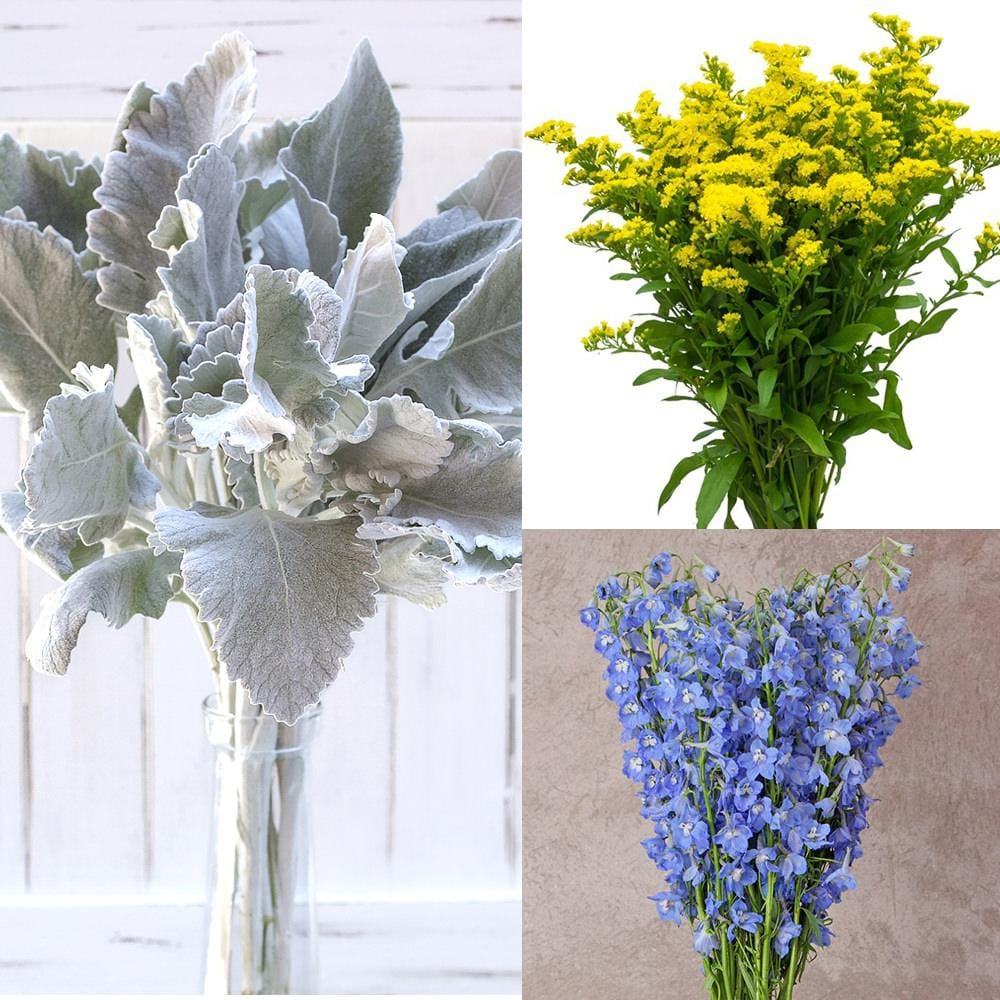 Solidago, Delphinium Royal and Dusty Miller Mix Box