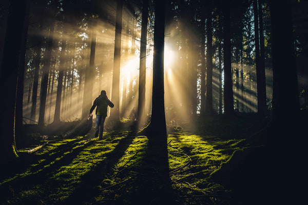 What Exactly IS ... Forest Bathing?