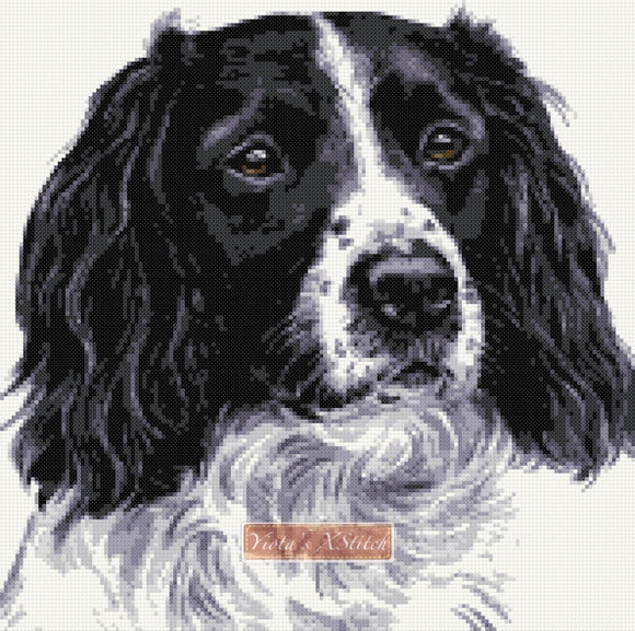 Black Springer Spaniel No2 counted cross stitch kit