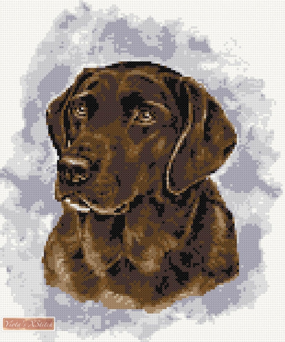 Chocolate labrador No3 counted cross stitch kit