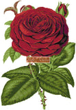 Red rose counted cross stitch kit