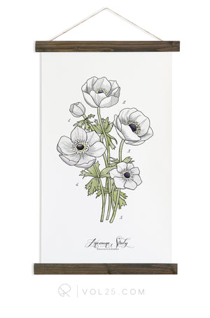 Anemone Study Vol.1 | Canvas Wall hanging | more options VPB301 - vol25