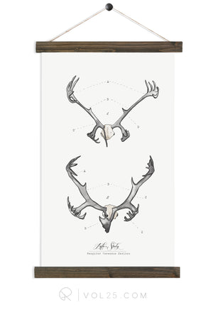 Antler Study Caribou | Nordic Collection | More options