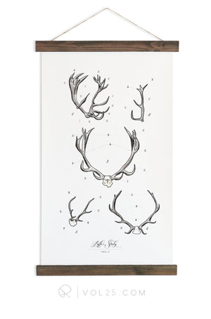 Antler Study Study Vol.1 | Canvas Wall hanging | more options VP101 - vol25