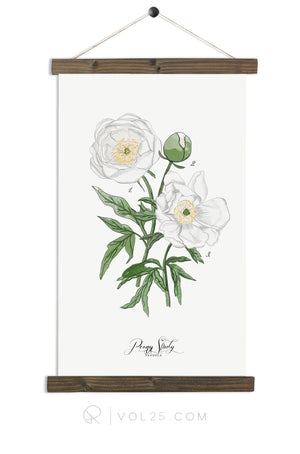 Peony Study White | Botanic Collection | more options