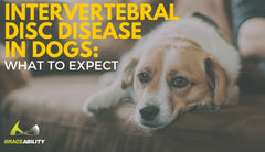 Intervertebral Disc Disease (IVDD) in Dogs: What to Expect