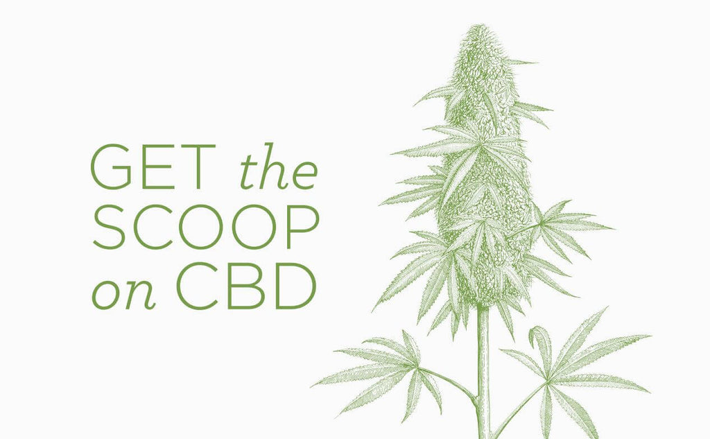 What is CBD? Get the scoop on why we put it in our new Superfood Shots