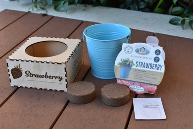 Pot Plant Kit (Strawberry) - Wilson-Made