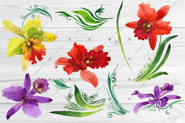 Colorful Orchid Png Watercolor Set Digital