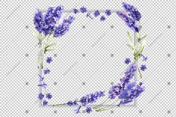Purple Lavender Watercolor Png Frame Flowers Design