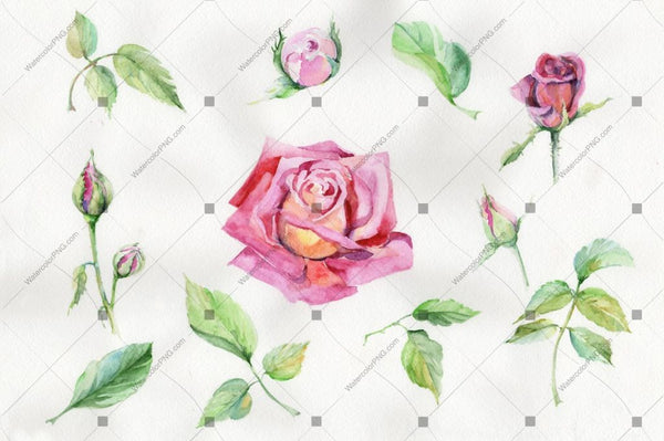 Red Rose And Leaves Watercolor Flowers Png Flower
