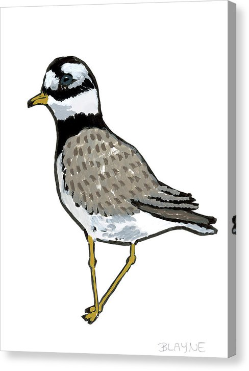 Courage Gull - Canvas Print
