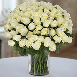Pure love 50 white roses