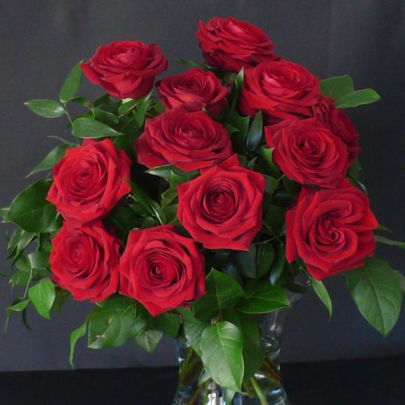 12 Best Red Naomi Roses With Mixed Foliages