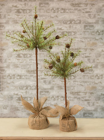 "Cypress Topiary Tree, 30"" - Old-Time-Shoppe"