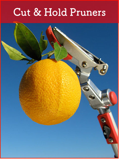 Cut and Hold Pruners