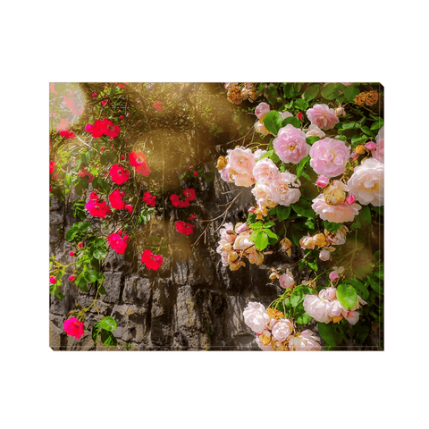 Image of Canvas Wrap - Irish Roses Canvas Wrap Moods of Ireland 8x10 inch