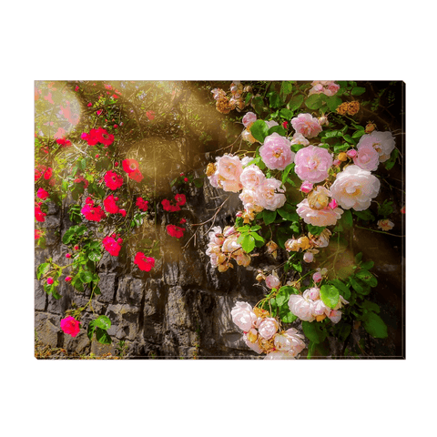 Image of Canvas Wrap - Irish Roses Canvas Wrap Moods of Ireland