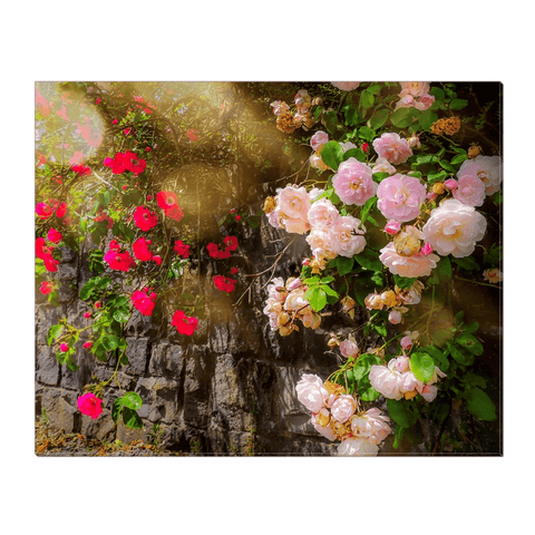 Image of Canvas Wrap - Irish Roses Canvas Wrap Moods of Ireland 16x20 inch