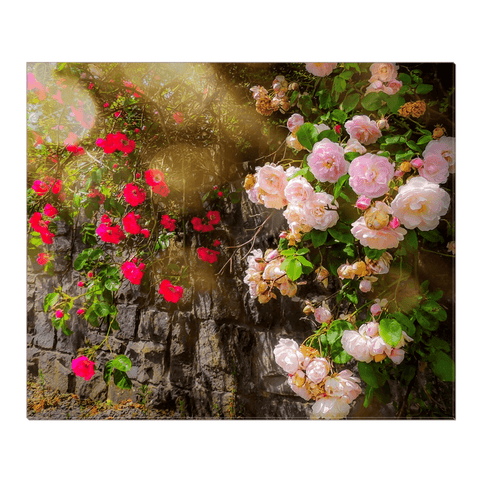 Image of Canvas Wrap - Irish Roses Canvas Wrap Moods of Ireland 20x24 inch