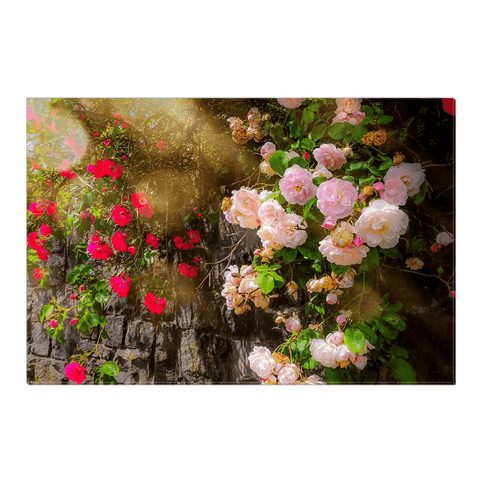 Image of Canvas Wrap - Irish Roses Canvas Wrap Moods of Ireland 16x24 inch