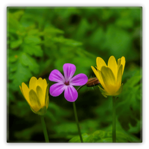Metal Magnets - Irish Flowers Collection Metal Magnets Moods of Ireland