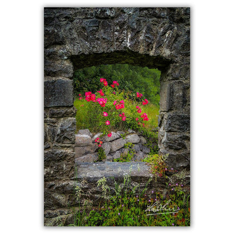Poster Print - Wild Irish Roses in County Galway, Ireland Poster Print Moods of Ireland