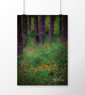 Portumna Forest Park Paradise in County Galway, Ireland Poster Poster Moods of Ireland