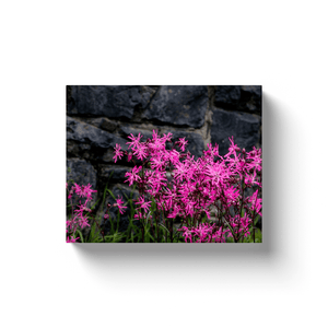 Canvas Wraps - Ragged Robin against Stone Wall, County Clare, Ireland Canvas Wrap Moods of Ireland 8x10 inch
