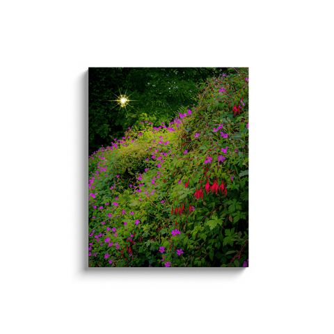 Canvas Wraps - Roadside Irish Wildflower Cascade in Afternoon Sun Canvas Wrap Moods of Ireland 24x30 inch