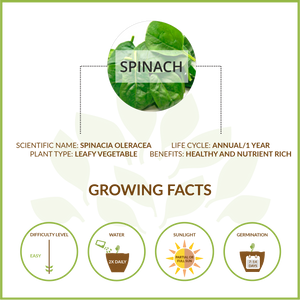SPINACH LARGE GIY KIT